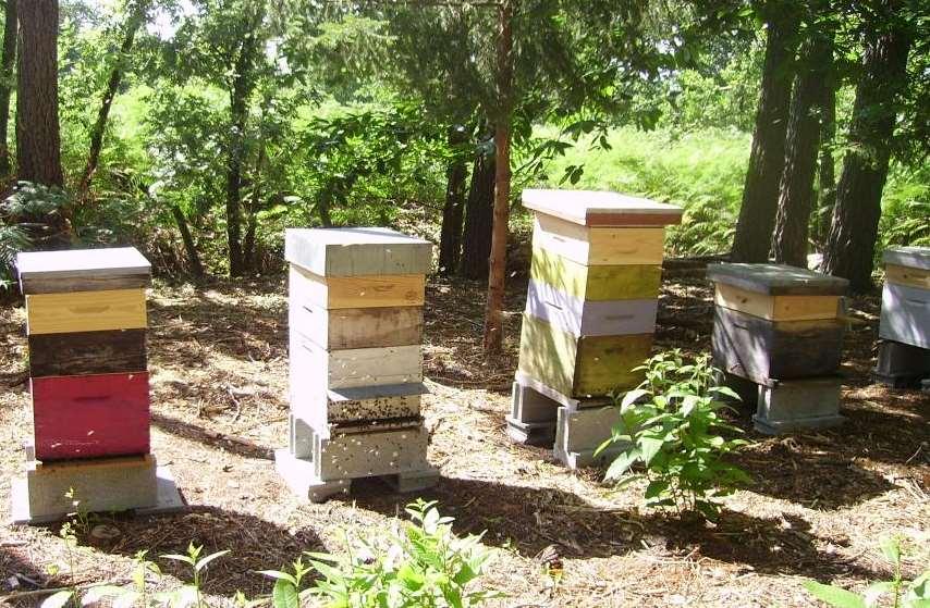 Ruches du rucher pédagogique du GDSA de la Sarthe
